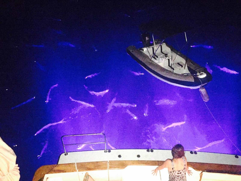 Queenship-Barretta 76 2004-SEA MYSTIC Fort Myers-Florida-United States-Underwater Lights-1588160 | Thumbnail