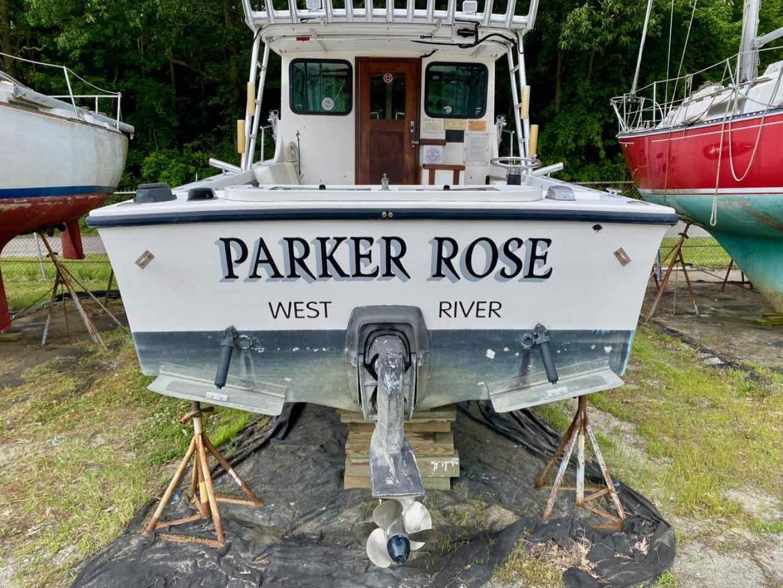 Picure of Parker Rose