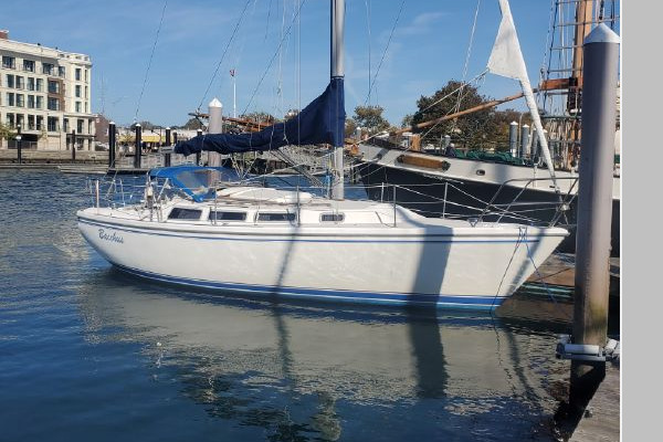 30-ft-Catalina-1983-30-Bacchus Newport Rhode Island United States  yacht for sale