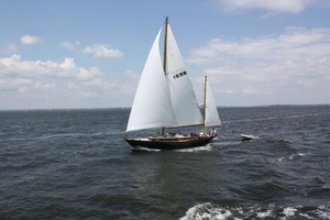 Picture of Shearwater