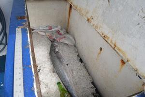 70' Drift Fishing Vessel 90 Person Commercial 1986 70' Drift Fishing Vessel Ice Box
